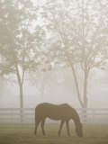 A Thoroughbred Gelding Crops the Bluegrass at the Kentucky Horse Park Stampa fotografica di Gehman, Raymond