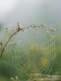 Spiderweb Covered in Dew Photographic Print by Darlyne A. Murawski