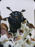 Extreme Close-up of a Beetle on a Lichen Photographic Print by Paul Zahl