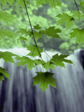 Maple Leaves against a Waterfall Backdrop Lámina fotográfica