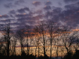 Twilight Sky over a Grove of Trees Photographic Print by Vlad Kharitonov