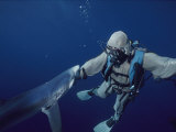 A Blue Shark Bites the Hand of a Diver Wearing a Chain Mail Suit Photographic Print by Brian J. Skerry
