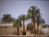 The Surface of the Lake Reflects Part of a Temple Framed by Palm Trees Photographic Print by Stephen St. John