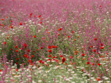 Wildflower Farming on a Kibbutz in Springtime Fotografisk tryk