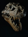 Skull of a Tyrannosaurus Rex Photographic Print by Ira Block
