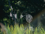 Spiderwebs Covered in Dew Photographic Print