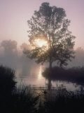 The Sun Shines Through Early-Morning Fog onto Water Bordered by Trees and High Grass Lámina fotográfica por Littlehales, Bates