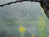 A Spiderweb Covered in Dew Photographic Print