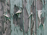 Paint peels from the walls of a home abandoned after a hurricane, Giclee Print