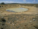 Scattered Bones Bleached by the Sun Lie Near an Evaporating Watering Hole Fotografisk tryk af Paul Chesley