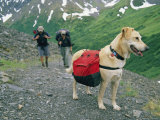 A Couple Hikes with Their Dog Along the Crow Pass Trail in Alaska Photographic Print by Rich Reid