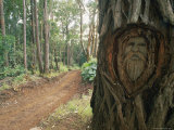 A Face Carved into a Tree on the Maunahui Road Photographic Print by Rich Reid