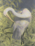 A Great Egret Photographed with Infrared Film Photographic Print by Annie Griffiths