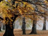Autumn Foliage Fotografisk tryk af Mattias Klum