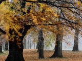 Autumn Foliage Photographic Print by Mattias Klum