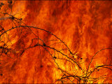 Fire Consumes the Prairie Photographic Print by Joel Sartore