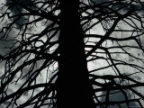 Silhouetted Tree Trunk Photographic Print by Sam Abell
