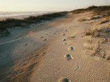 Footprints on the Beach Photographic Print by Walter Meayers Edwards