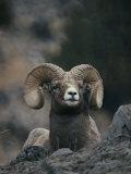 Gros plan d'un mouflon d'Amérique (ovis canadensis) allongé sur des cailloux Photographie