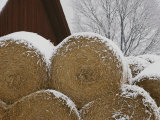Snow Dusts Rolls of Hay Photographic Print by Mattias Klum