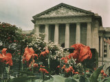 Flowers in Front of a Columned Building in Washington, D.C. Fotografisk trykk av Charles Martin