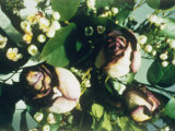 A Close View of Roses Photographic Print by Sisse Brimberg