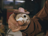A Person Holding a Kangaroo Rat That Sports a Miniature Cowboy Hat Photographic Print by Walter Meayers Edwards