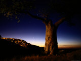Scenic View of a Tree at Twilight Photographic Print by Chris Johns
