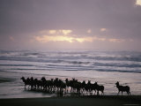 Roosevelt Elk Walk Along a Beach in California Photographic Print by Dick Durrance
