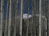 A Mountain, Capped with Fresh Snow, Peeks Through Aspen Trees Photographic Print by Stacy Gold