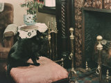 A Cat is Perched on an Ottoman in Front of a Fireplace Photographic Print by Willard Culver