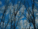 Ice-Coated Tree Branches Photographic Print by Maria Stenzel