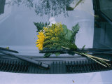 A Bouquet of Flowers Left on Someones Windshield Photographic Print by Sisse Brimberg