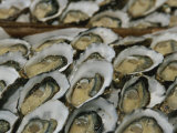 Oysters on the Half-Shell Glisten with Briny Sweetness Reproduction photographique par Nicole Duplaix