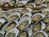 Nicole Duplaix - Oysters on the Half-Shell Glisten with Briny Sweetness Fotografická reprodukce