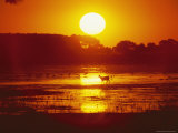 Distant Deer Silhouetted in a Marsh by a Low-Lying Sun Photographie par Amy &amp; Al White &amp; Petteway
