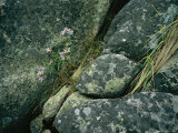 Wildflowers and Grass Find a Tenuous Hold Among Large Rocks Photographie par Amy &amp; Al White &amp; Petteway