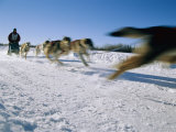A Dogsled Team Whizzes Past the Camera During a Race Along Chena Lake Photographic Print by Maria Stenzel