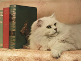 A Cat Rests Near a Stack of Books Photographic Print by Willard Culver