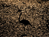 Silhouette of a Flamingo against the Glittering Water Photographic Print by Michael Nichols