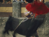 Panned View of a Bullfight Photographic Print by Joe Scherschel