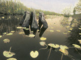 A Decaying Tree Stump Stands in a Slough in a Southern Swamp Photographic Print by Annie Griffiths