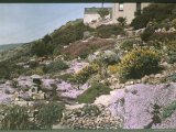 A Rock Garden Near San Francisco Photographic Print by Charles Martin