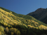 A View of Quaking Aspen Trees Displaying Fall Colors Photographic Print by Marc Moritsch