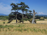 Two Trees and a Old Snag Stand in the Middle of a Meadow Photographic Print