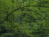 A Lush Green Eastern Woodland View Photographic Print by Bates Littlehales