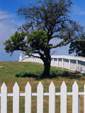 A White Picket Fence Surrounds a Field with a Partially Dead Tree Photographic Print