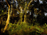 The Exotic Rain Forest Along Remote Itui River in Amazon River Basin Photographic Print by John Eastcott & Yva Momatiuk