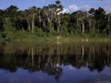 The Itui River Rain Forest, Along This Tributary of the Amazon Photographic Print by John Eastcott & Yva Momatiuk
