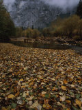 Fallen Leaves Cover the Ground Near the Merced River Photographic Print